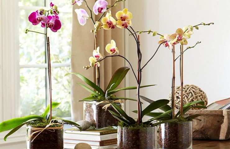 правильный горшок для орхидеи фото