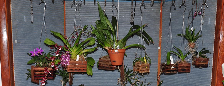 Выращивание орхидей в домашних 46