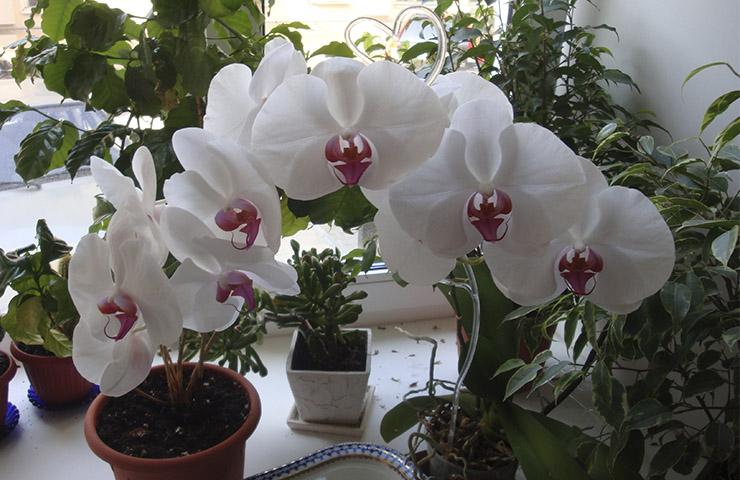 Уход за цветами после цветения в домашних условиях